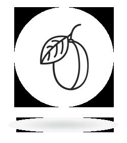 Šljiva
